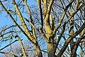 Hannover Linden 2014-I by-RaBoe 26.jpg