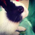 Hare black white.JPEG