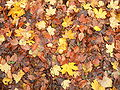 Herbst-ebw-5.jpg