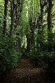 Het park van het Ursulinenklooster te Tildonk , Haacht - 368750 - onroerenderfgoed.jpg