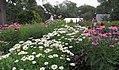 Hillwood Gardens in July (19806810351).jpg