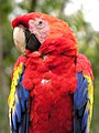 Honduras-0517 - Pretty Bird........ (8407530163).jpg