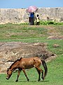 Horse and Passersby on Ramparts - Fort District - Galle - Sri Lanka (14024040836).jpg