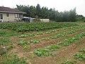 Horta do Akio Nakaema - panoramio.jpg