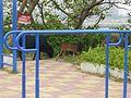 HuiAn - Luoyang Bridge - P1230936.JPG