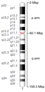 Map of Chromosome 7