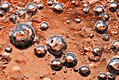Iced Bubbles at sunset (6715250113).jpg