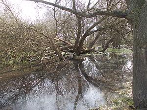 Ickenham Marsh - Ickenham Marsh flooded