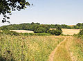 Icknield Way Path - geograph.org.uk - 204527.jpg