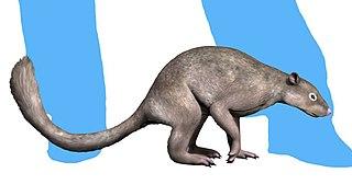 <i>Ignacius</i> extinct genus of mammals