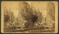 In Cheyenne Canyon, Colorado, from Robert N. Dennis collection of stereoscopic views.png