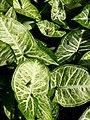 Insetos e Planta por Tatiane Domingues.jpg