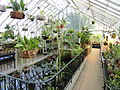 Interior view - Talcott Greenhouse - Mount Holyoke College - DSC04499.JPG