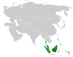 Iole olivacea distribution map.png
