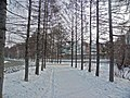 Irkutsk. Akademgorodok. February 2013 - panoramio (123).jpg