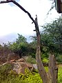 JNU Tree and Landscape.jpg