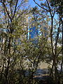 James Warner Park, Brisbane 06.2014 05.JPG