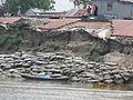 Jamuna River Bogra, Bangladesh 21.jpg