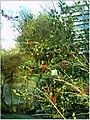January Frost Botanic Garden Freiburg - Master Botany Photography 2014 - panoramio (3).jpg