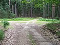 Jelení, rozcestí v lese.jpg