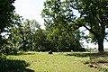 Jeleniec park pałacowy 2012 05 24 fot K Lewandowski 0519.JPG