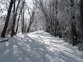 Jogger on Snow Covered River Trail - panoramio.jpg