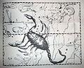 "Johannes Hevelius - Prodromus Astronomia - Volume III ""Firmamentum Sobiescianum, sive uranographia"" - Tavola II - Scorpius.jpg"