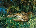 John Macallan Swan - Indian Leopards.jpg