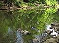 Jonathan Creek (north-northwest of Fultonham, Ohio, USA) 1 (27979541103).jpg