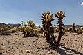 Joshua Tree National Park (California, USA) -- 2012 -- 5669.jpg