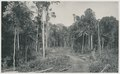 KITLV - 12600 - Kleingrothe, C.J. - Medan - Forest road near the tobacco company Sungei Bahasa near Batangkuwis in Deli - 1903.tif