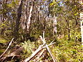 Kalianna Ridge Track as it climbs from Yadboro River to Kalianna Ridge, Budawang National Park 001.jpg