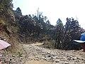 Kalinchowk road10.jpg