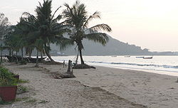 Coconut palms on the beach, Karwar