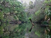 Kayaking on the Hillsborough River