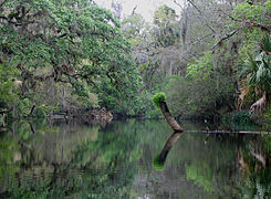 Kayaking on the Hillsborough River.jpg