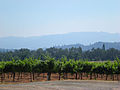 Kenwood, California - Stierch.jpg