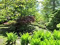 Keukenhof Garden (53).JPG