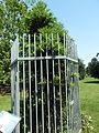 Kew Gardens Wollemi Pine P1170604.JPG