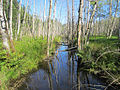 Killarney Creek (6074518670).jpg