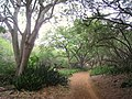 Koko Crater Botanical Garden - IMG 2311.JPG