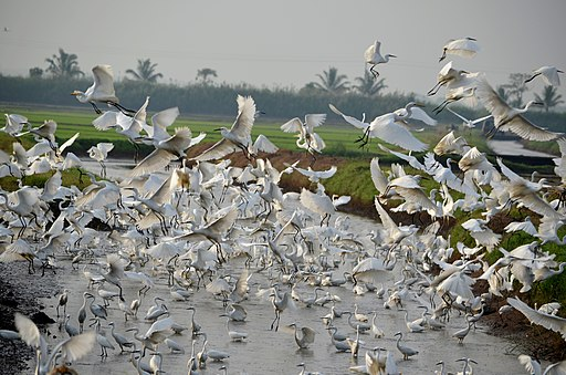 Kole WetLands Thrissur by Manoj Karingamadathil