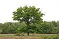 Kreis Pinneberg, Naturschutzgebiet Liether Kalkgrube 24.jpg