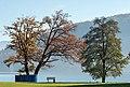 Krumpendorf Parkbad Eiche und Erle 11112015 2336.jpg