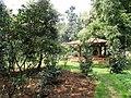 Kunming Botanical Garden - DSC02919.JPG