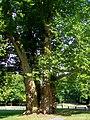 L'Isle-Adam (95), les Trois Frères, parc Manchez.jpg