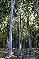 LSG Kühlung - Nienhäger Holz (Gespensterwald) (115).jpg