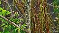 La nature sauvage de la guadeloupe.jpg