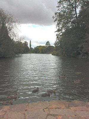 Elsham Hall - The Carp Lake