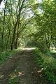 Langes Tannen Waldweg 05.jpg